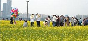 2019년 한강 유채꽃 축제 개최(19.5.11.~12.)